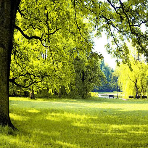 Пейзажи, природа