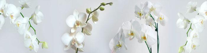 Фартук для кухни орхидеи