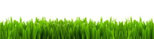фартук для кухни трава