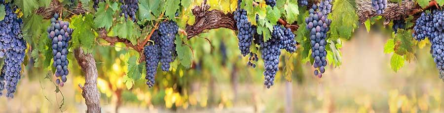 Фартук для кухни Виноград