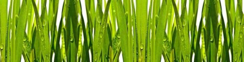 Фартук для кухни Зеленая трава