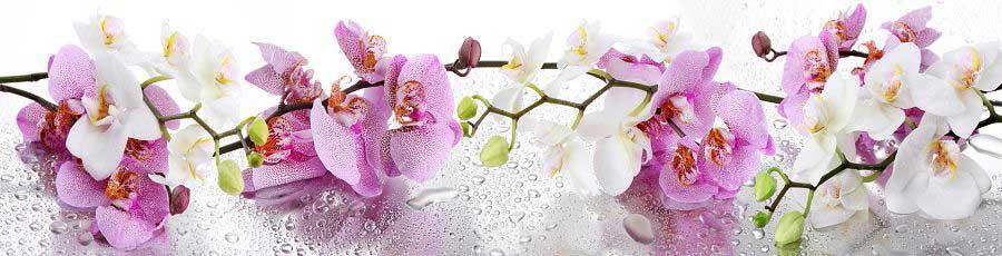 скинали орхидея на белом фоне