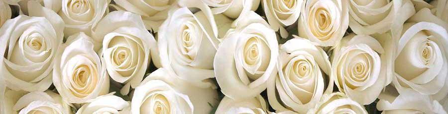 Скинали Розы