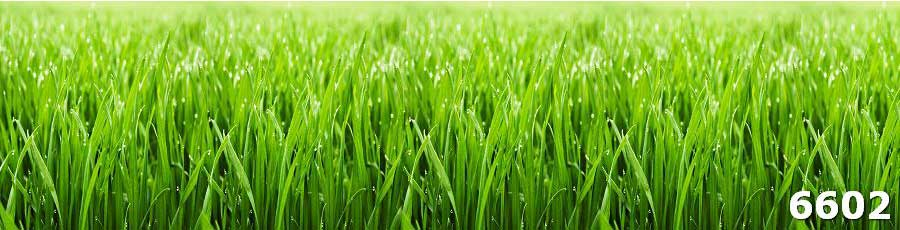 скинали трава