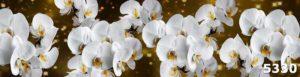скинали Белые орхидеи