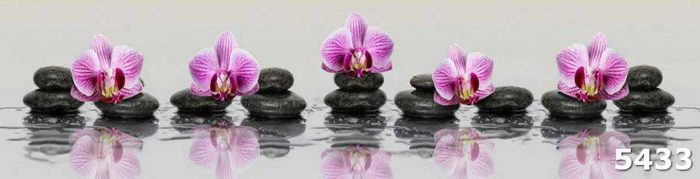 Скинали Орхидеи на сером фоне