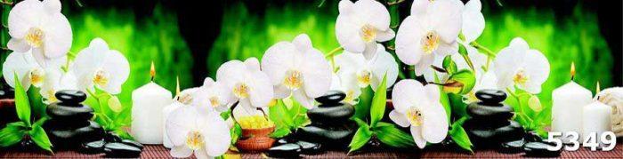 Орхидеи на камнях скинал