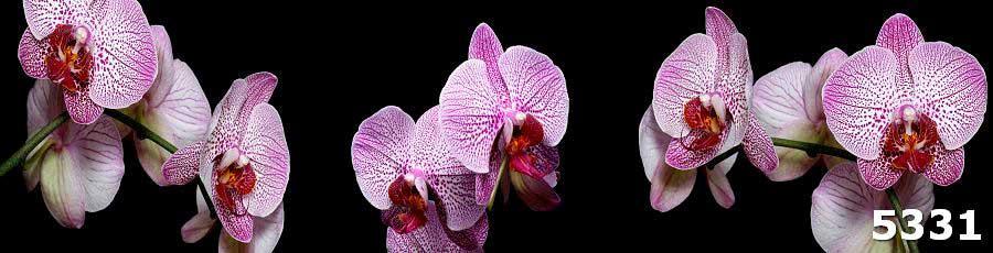 Скинали Орхидеи фиолетовые