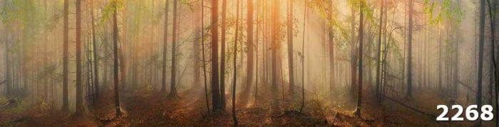 Скинали лес