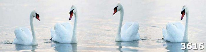 Скинали из каленого стекла Лебеди